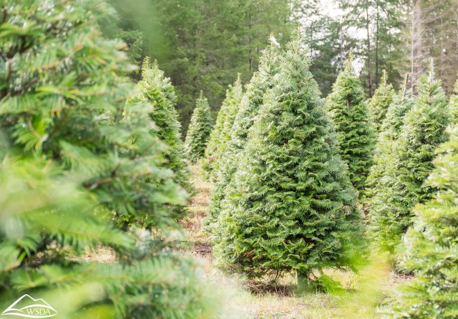 Washington State Department of Agriculture, Washington Christmas Tree Farm